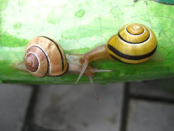 Snails after a rainy day